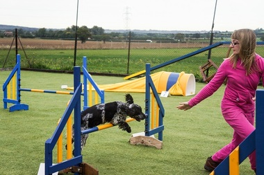 Picture of dog & human doing Agility